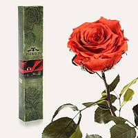 Одна долгосвежая роза FLORICH в подарочной упаковке. Кофейный топаз 5 карат, короткий стебель. Харьков, фото 1