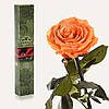 Одна долгосвежая роза FLORICH в подарочной упаковке. Золотистый Хризоберилл 7 карат, короткий стебель. Харьков