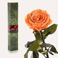 Одна долгосвежая роза FLORICH в подарочной упаковке. Золотистый Хризоберилл 7 карат, короткий стебель. Харьков, фото 1