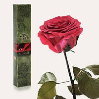 Одна долгосвежая роза FLORICH в подарочной упаковке. Розовый коралл 7 карат, короткий стебель. Харьков, фото 1
