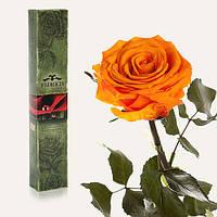 Одна долгосвежая роза FLORICH в подарочной упаковке. Оранжевый цитрин 5 карат, средний стебель. Харьков, фото 1