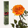 Одна долгосвежая роза FLORICH в подарочной упаковке. Оранжевый цитрин 7 карат, короткий стебель. Харьков