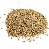Пшеница органическая, 1 кг