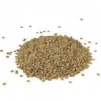Чечевица зеленая, семена чечевицы