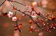 """Настенный обогреватель-картина """"Цветущее дерево"""" 100х60 см."""