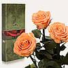 Три долгосвежие розы FLORICH в подарочной упаковке. Золотистый хризоберилл 7 карат, средний стебель. Харьков
