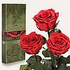 Три долгосвежие розы FLORICH в подарочной упаковке. Алый рубин 7 карат, короткий стебель. Харьков