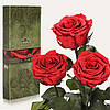 Три долгосвежие розы FLORICH в подарочной упаковке. Алый рубин 5 карат, средний стебель. Харьков