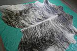 Велика сіра шкура бика для декору інтер'єру в Одесі сіро тигрова, фото 2