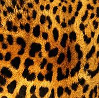 """Подушка """"Леопард"""""""