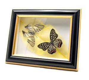 Картины, бабочки в рамке, панно, ключницы