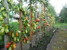 Высоко и среднерослые (индетерм.) томаты: