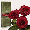 Три долгосвежие розы FLORICH в подарочной упаковке. Багровый гранат 7 карат, короткий стебель. Харьков