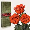 Три долгосвежие розы FLORICH в подарочной упаковке. Огненный янтарь 5 карат, короткий стебель. Харьков