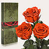 Три долгосвежие розы FLORICH в подарочной упаковке. Огненный янтарь 7 карат, короткий стебель. Харьков