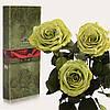 Три долгосвежие розы FLORICH в подарочной упаковке. Лаймовый Нефрит 5 карат, короткий стебель. Харьков