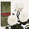 Три долгосвежие розы FLORICH в подарочной упаковке. Белый Бриллиант 5 карат, средний стебель. Харьков