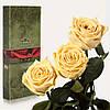 Три долгосвежие розы FLORICH в подарочной упаковке. Желтый Топаз 5 карат, короткий стебель. Харьков