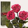 Три долгосвежие розы FLORICH в подарочной упаковке. Розовый  Коралл 7 карат, короткий стебель. Харьков