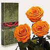 Три долгосвежие розы FLORICH в подарочной упаковке. Оранжевый  Цитрин 7 карат, средний стебель. Харьков