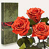 Три долгосвежие розы FLORICH в подарочной упаковке. Кофейный Топаз 5 карат, короткий стебель. Харьков