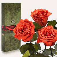 Три долгосвежие розы FLORICH в подарочной упаковке. Кофейный Топаз 7 карат, короткий стебель. Харьков, фото 1