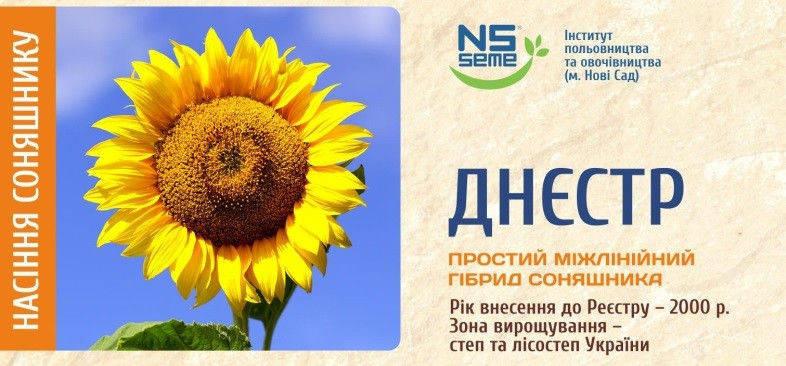 Семена подсолнечника Днестр,  засухоустойчивый, высокоурожайный, 107–111 дней.  Стандарт, фото 2