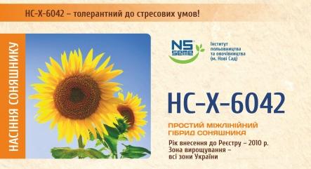 Семена подсолнечника НС-Х-6042 ( улучшеный подсолнечник Сержан), Стандарт, фото 2