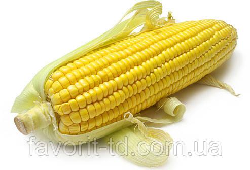 Семена кукурузы НК Люциус ФАО 340 (Сингента)