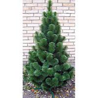 Сосна (елка) искусственная новогодняя 1.2 м - микс