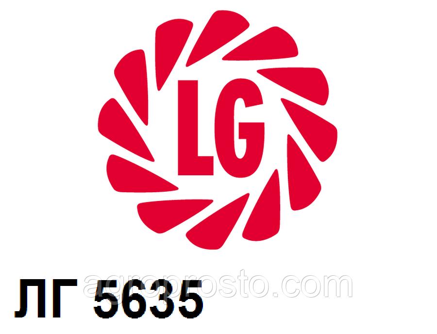 Гибрид подсолнечника Лимагрейн ЛГ 5635 (Limagrain)