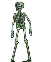 Декор настенный Скелет зеленый (150см)