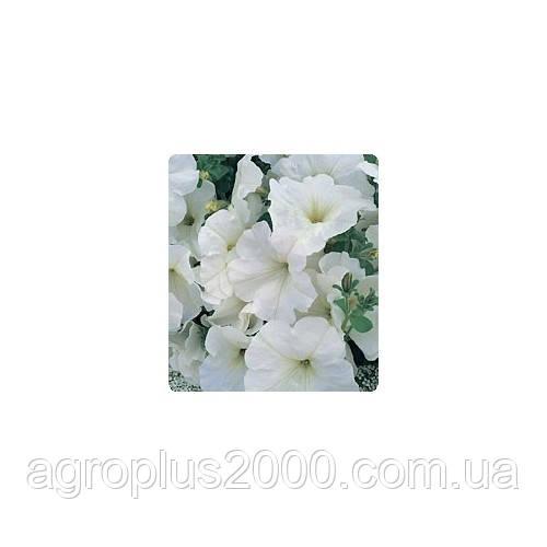 Семена петунии многоцветковой Амфора White 1000 драже Kitano Seeds, фото 1