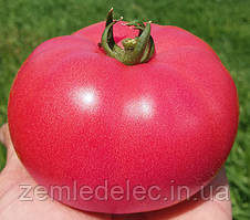 Семена томата Розалба F1(TL 12774) 250 семян Sakura