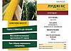 Семена кукурузы ЛУИДЖИ (ФАО 250) Коссад Семанс, фото 3