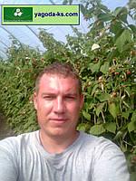 Разработка, составление бизнес-планов, бизнес-планирование процесса производства ягодных культур