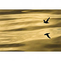 Фотообои на плотной полуглянцевой бумаге для стен 184*127 см из 1 листа: Отражение