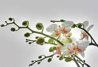 Фотообои на плотной полуглянцевой бумаге для стен 184*127 см из 1 листа: Цветок орхидеи