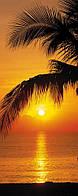 Фотообои на плотной полуглянцевой бумаге для стен 92*220 см из 2 листов: Пальмы, пляж и восход