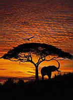 Фотообои на плотной полуглянцевой бумаге для стен 194*270 см из 4 листов: Закат в Африке