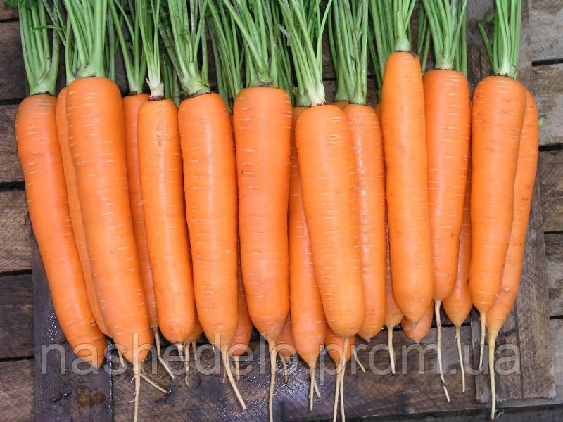 Семена моркови Боливар F1 100 000 сем. Clause