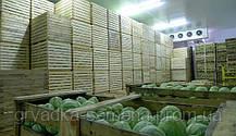 Хранение белокочанной капусты. Основные моменты.