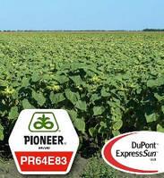 Семена подсолнечника Пионер устойчивые к гербициду экспресс, гранстар