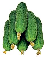 Професійні насіння ОГІРКІВ