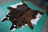 Аргентинские большие шкуры коров, красивые необычные декоративные ковры для дома, фото 2