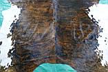 Шкура корови, підлогова інтер'єрна шкура екзотична тигрова з білими боками, фото 5