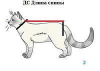 Размер одежды для кошек