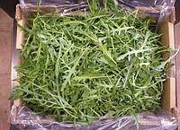 Семена рукколы Вайлд Рокет 50 гр. Тирас