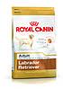 Royal Canin Labrador Retriever 12кг- корм для собак породы лабрадор ретривер