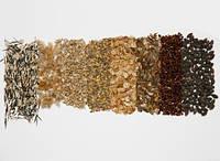 Семена лесных (хвойных) культур